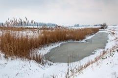 Gefrorener Abzugsgraben mit Schilfen in einer schneebedeckten niederländischen Landschaft Lizenzfreie Stockfotografie