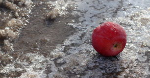 Gefrorener Apfel auf Eis Lizenzfreies Stockbild