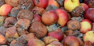 Gefrorener Apfel auf Eis Stockfotografie