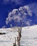 Gefrorener Baum Lizenzfreies Stockbild