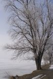Gefrorener Baum Stockbild
