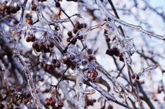 Gefrorener Baum 3 Lizenzfreie Stockbilder