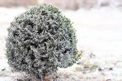 Gefrorener Baum Stockfoto