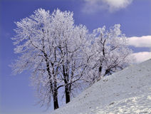 Gefrorener Baum in der Winteransicht Lizenzfreie Stockbilder