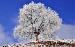Gefrorener Baum in der Winteransicht Lizenzfreie Stockfotos