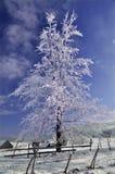 Gefrorener Baum in der Winteransicht Stockfoto
