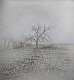 Gefrorener Baum in Horr Frost Lizenzfreies Stockfoto