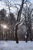 Gefrorener Baum im Stadtpark lizenzfreie stockfotos