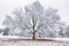Gefrorener Baum im Winter mit Schnee Stockfoto