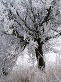 Gefrorener Baum im Winterdunst Stockfoto