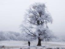 Gefrorener Baum mit Mann Lizenzfreie Stockbilder