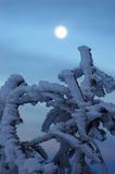Gefrorener Baum und Mond Stockfoto