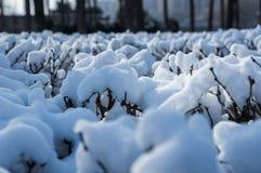 Gefrorener Baumast umfasst mit Schnee Stockbild