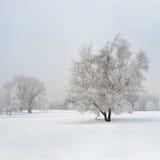 Gefrorener Birkenbaum im Nebel Stockbild