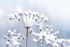 Gefrorener Blumenzweig im schönen Winterschneefallhintergrund Lizenzfreies Stockfoto