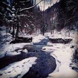 Gefrorener Fluss im Wald Stockfotos