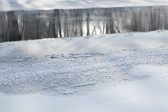 Gefrorener Fluss im Wald Stockfotografie
