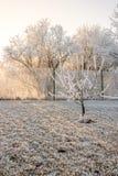 Gefrorener Garten mit Obstbäumen Stockfotografie