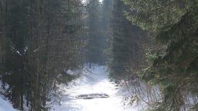 Gefrorener Gebirgsfluss Knehyne, das mit vielem Schnee in den Beskydy-Bergen bedeckt wird, Spalte knacken im schönen Eis sehr stock video footage