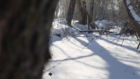 Gefrorener Naturwaldstrom in den Schneeoberteilen Bäumen gestalten landschaftlich stock video footage
