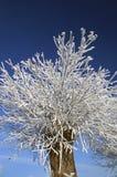 Gefrorener Nebel auf einem Baum lizenzfreie stockfotografie