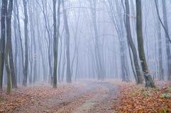 Gefrorener nebeliger Morgen Straße im Herbstwald lizenzfreie stockbilder