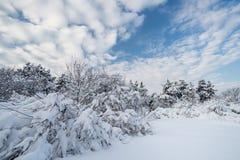 Gefrorener Schnee Lizenzfreies Stockbild