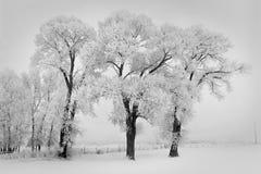 Gefrorener Schnee auf Bäumen auf einer landwirtschaftlichen Winterstraße stockfotografie
