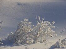 Gefrorener Schnee bedeckte Busch Stockbild