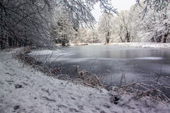 Gefrorener See im Wald Stockbild