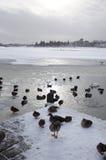 Gefrorener See mit den schwimmenden Enten Lizenzfreies Stockbild