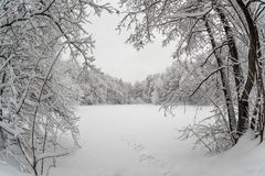 Gefrorener See umgeben durch schneebedeckten Wald lizenzfreies stockfoto