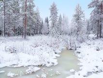Gefrorener Sumpf im Winterwald Stockbild