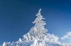 Gefrorener Tannenbaum getrennt auf blauem Himmel Stockfoto