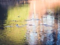 Gefrorener Teich mit Seerosen und buntem Eis-Hintergrund Stockfoto
