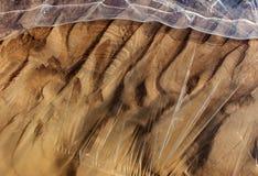 Gefrorener und eisiger Flussgrund im Sonnenlicht Stockfoto