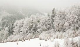 Gefrorener verschneiter Winter Landscaoe Stockfoto