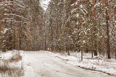 Gefrorener Wald Lizenzfreie Stockfotos