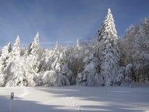 Gefrorener Wald Stockfotos