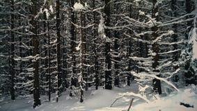 Gefrorener Wald Lizenzfreie Stockbilder