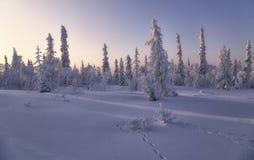 Gefrorener Wald Stockfoto