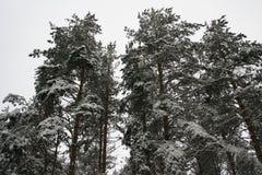Gefrorener Wald Lizenzfreies Stockbild