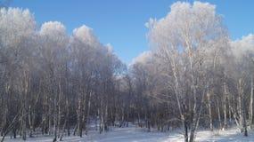 Gefrorener Wald Stockfotografie