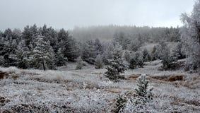 Gefrorener Wald im Winter Stockfotografie