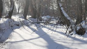 Gefrorener Waldstrom in den Schneeoberteilen der Baumnaturlandschaft stock video