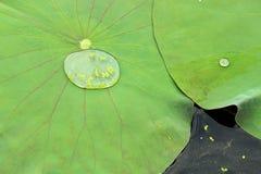 Gefrorener Wasser-Tropfen Stockbild