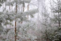 Gefrorener Weihnachtsbaum über Weihnachtsbaum-Waldhintergrund Lizenzfreies Stockbild