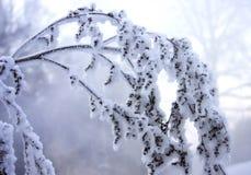 Gefrorener Zweig Stockfoto