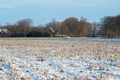 Gefrorenes Ackerland in der ländlichen niederländischen Landschaft Stockfotos
