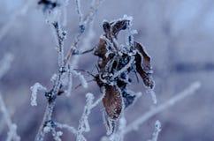 Gefrorenes Blatt auf der Niederlassung unter der Frost Landschaft mit Kopie s Stockbild